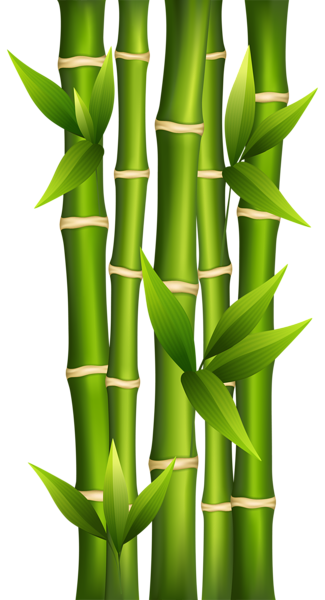 Bamboo border png. Clipart image abstract pinterest