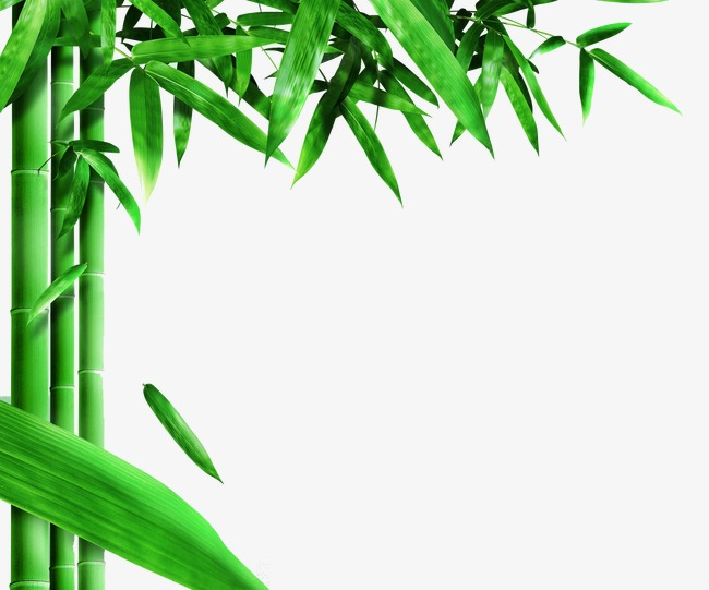 Png image and for. Bamboo clipart bamboo forest