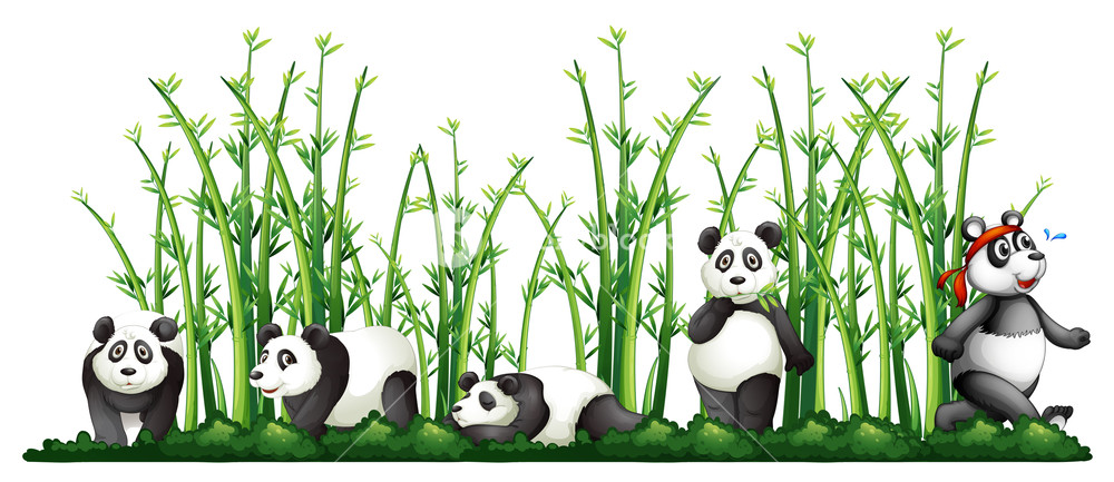 Pandas in the illustration. Bamboo clipart bamboo forest