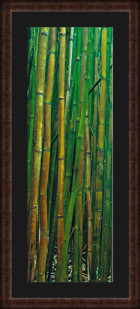 Bamboo clipart bamboo forest. A limited edition fine