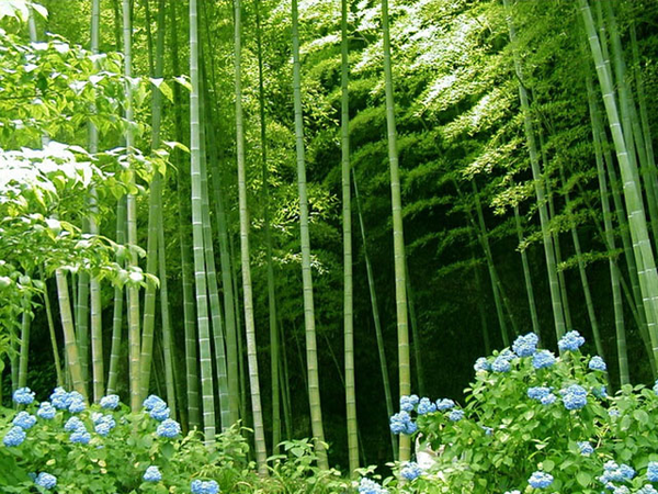 Bamboo clipart bamboo forest. Free images at clker