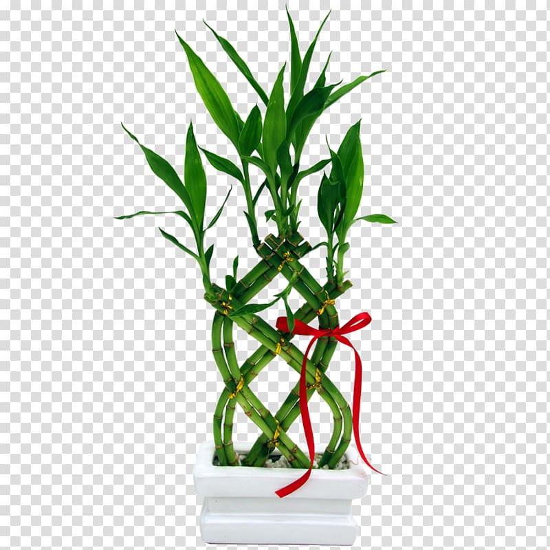 Lucky garden vase plant. Bamboo clipart bamboo grass