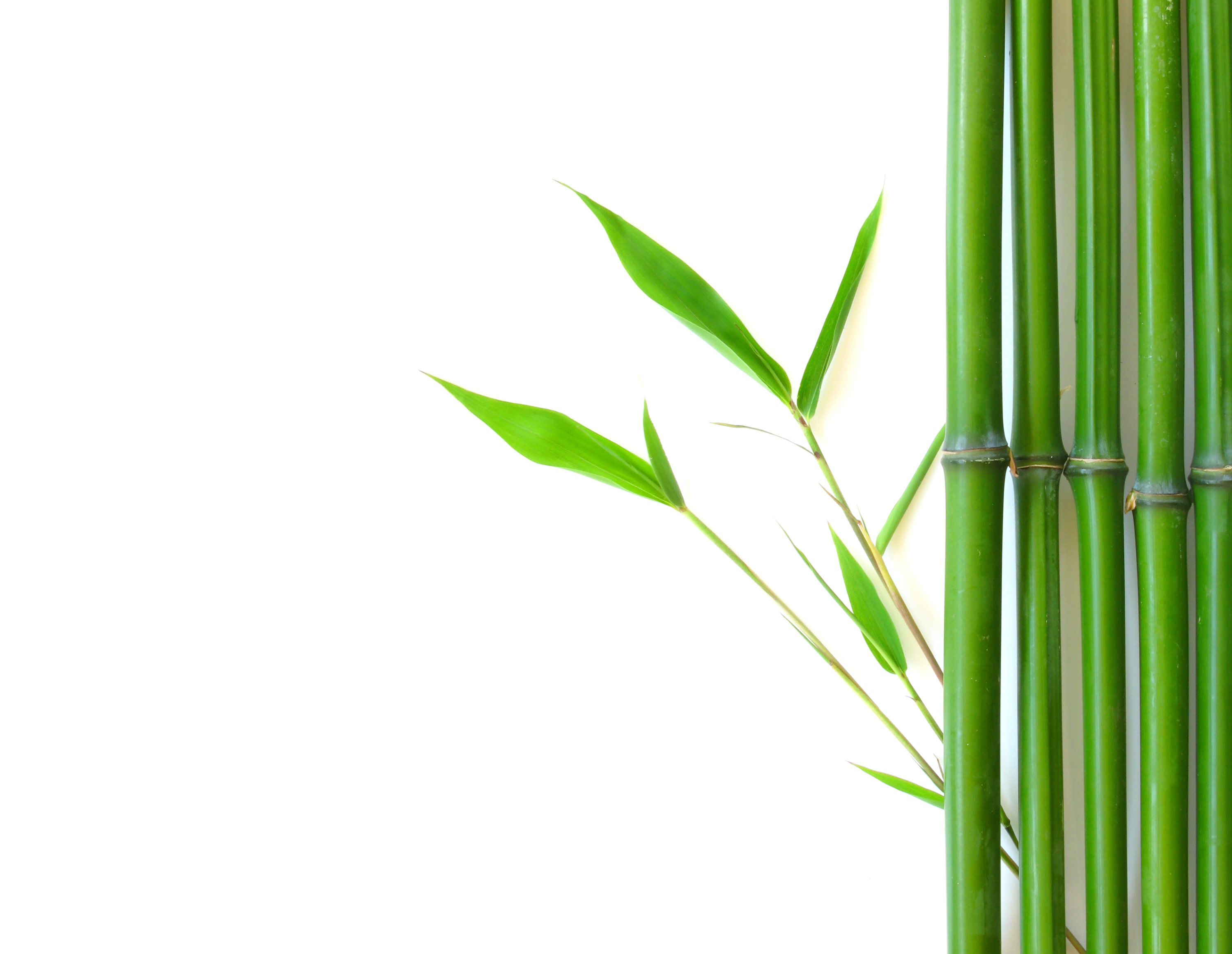Tree png background jpg. Bamboo clipart bamboo grass