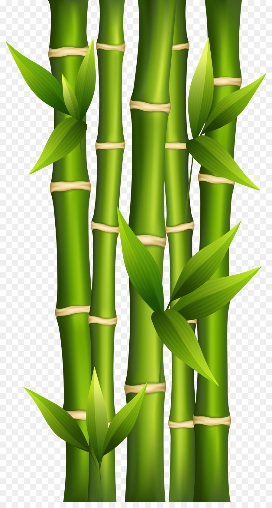 Banner kisspng com lce. Bamboo clipart bamboo shoot