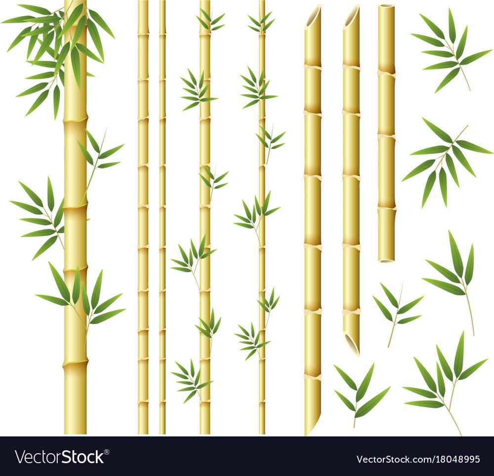 Bamboo clipart bamboo stalk. Stem x free clip