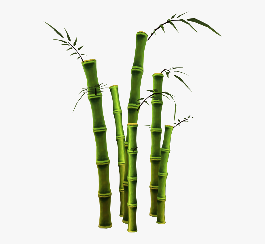 Cane transparent trees png. Bamboo clipart bamboo stalk