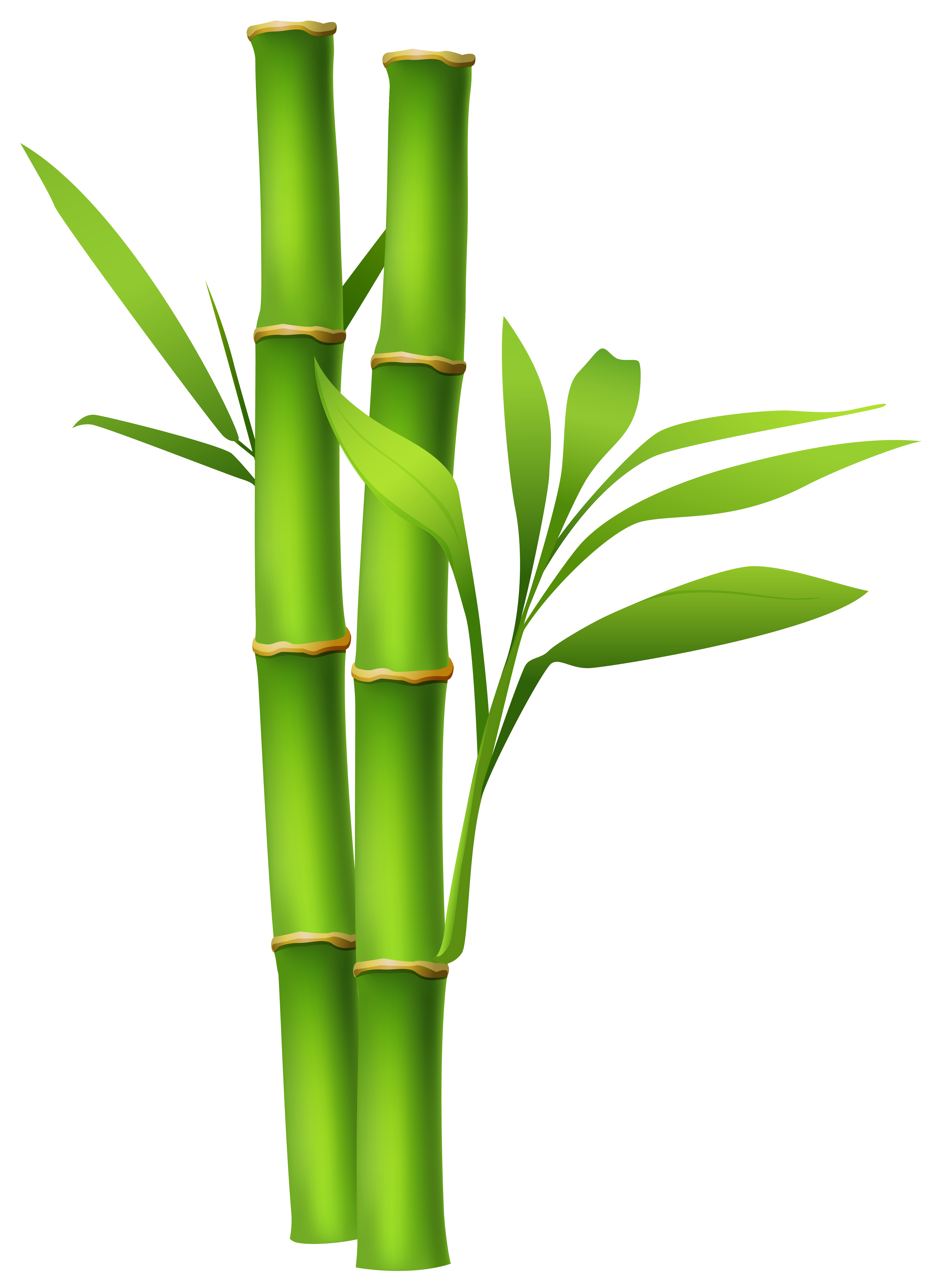 Clip art background cliparts. Bamboo clipart bamboo stalk