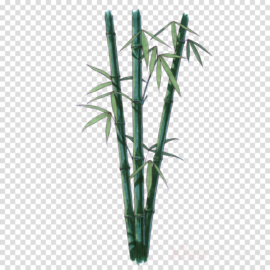 Plant flower leaf . Bamboo clipart bamboo stem