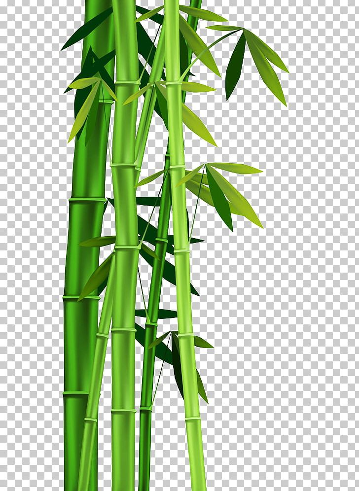 Bamboo clipart bamboo stem. Plant png bor frame