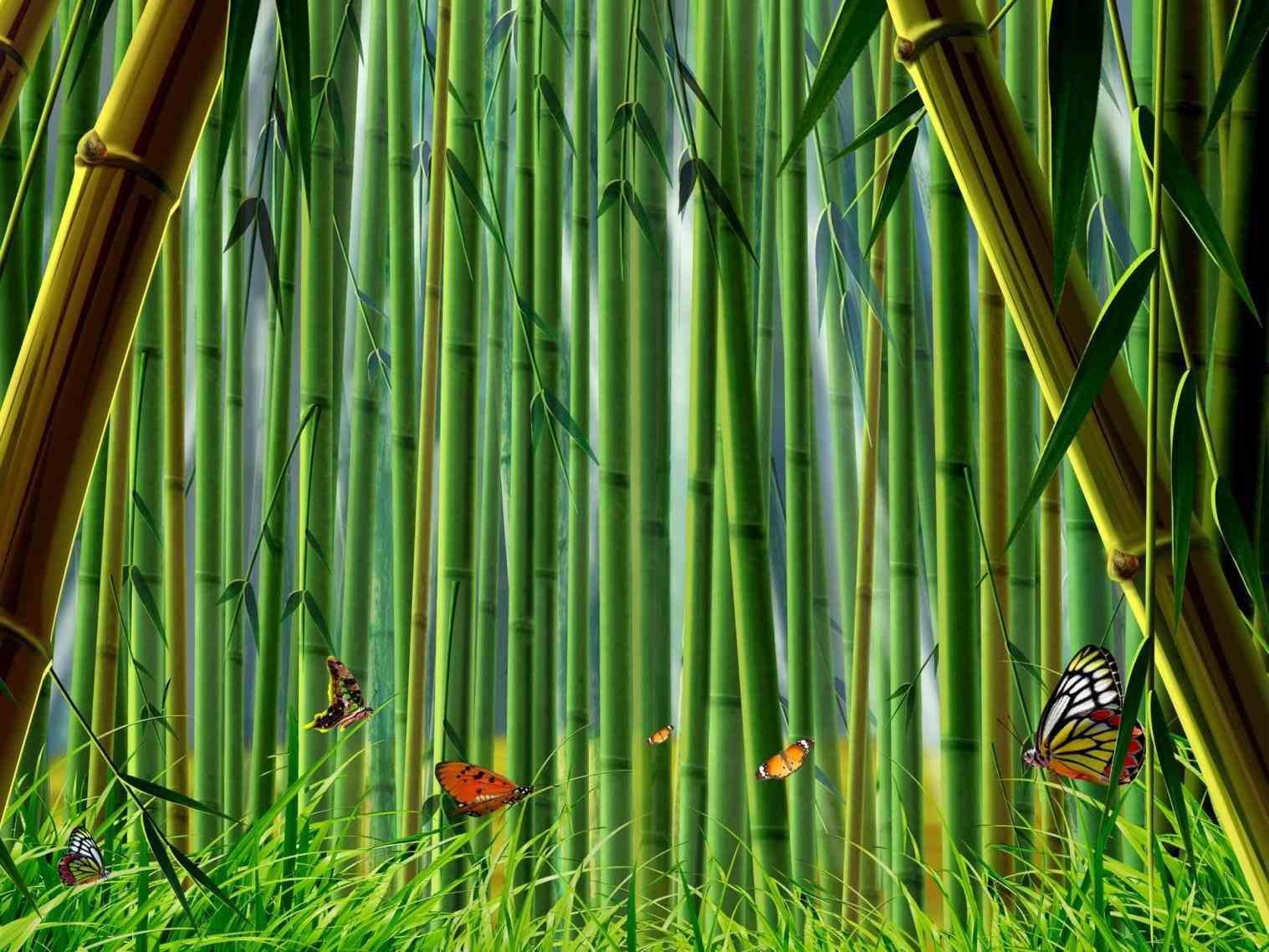 Bamboo bamboo wallpaper