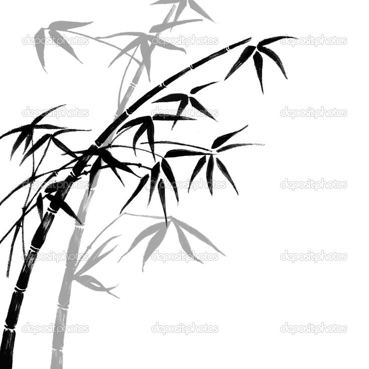 best images on. Bamboo clipart black and white