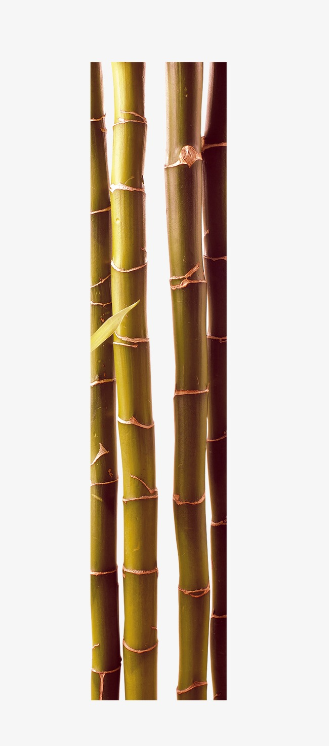 Beautiful chinese wind style. Bamboo clipart brown bamboo