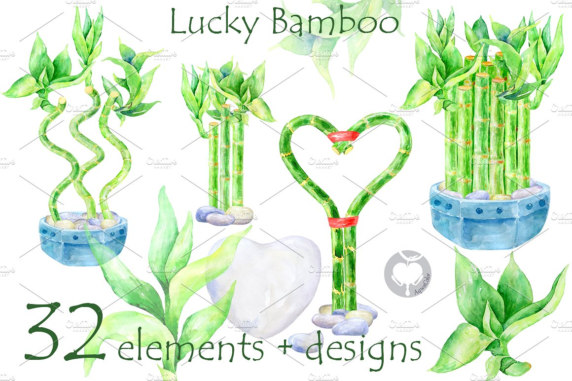 Bamboo lucky bamboo