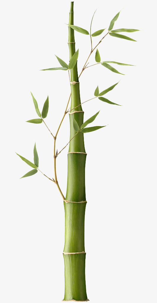 Bamboo clipart scroll. Pictures bar vector green