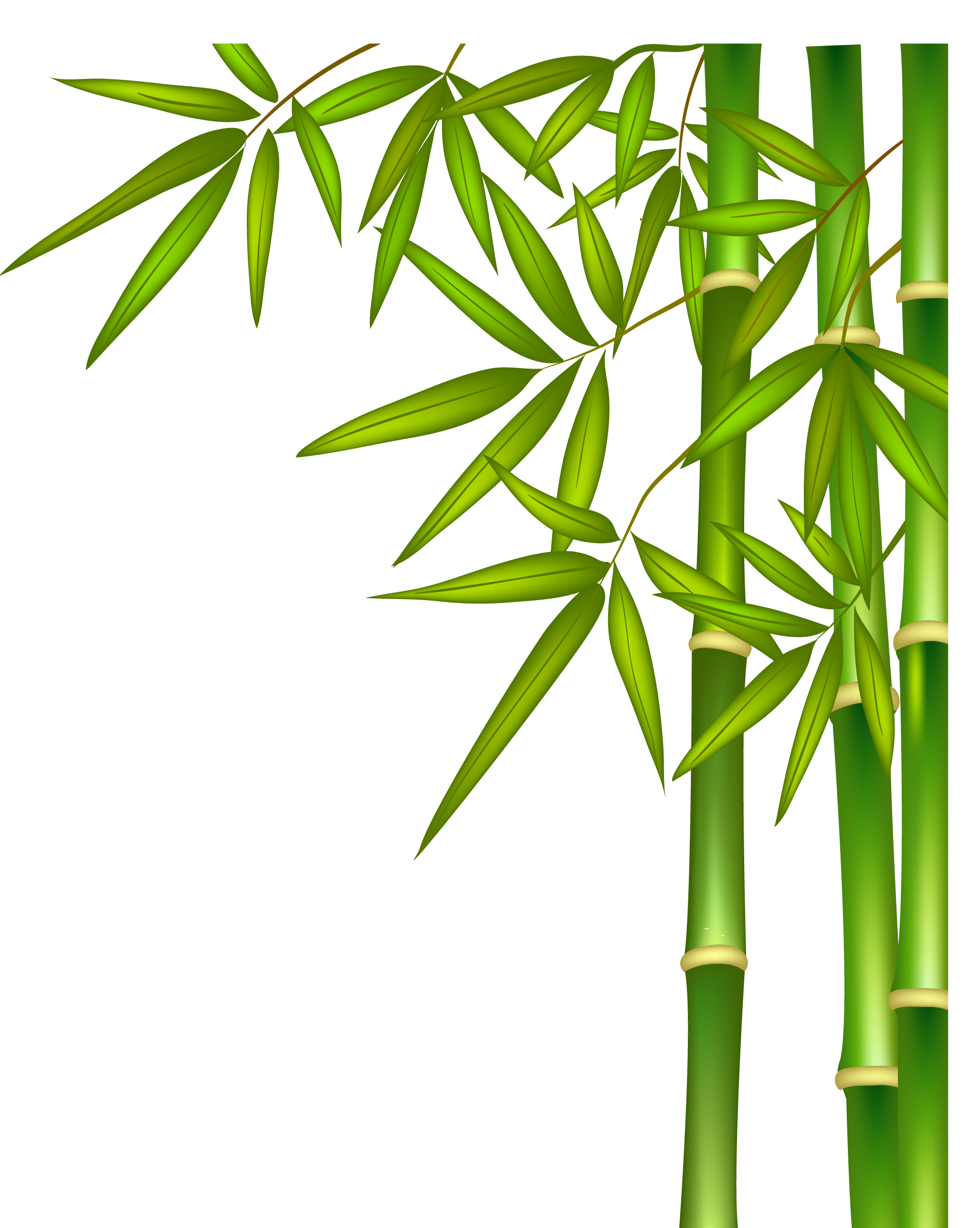 Green png download free. Bamboo clipart short