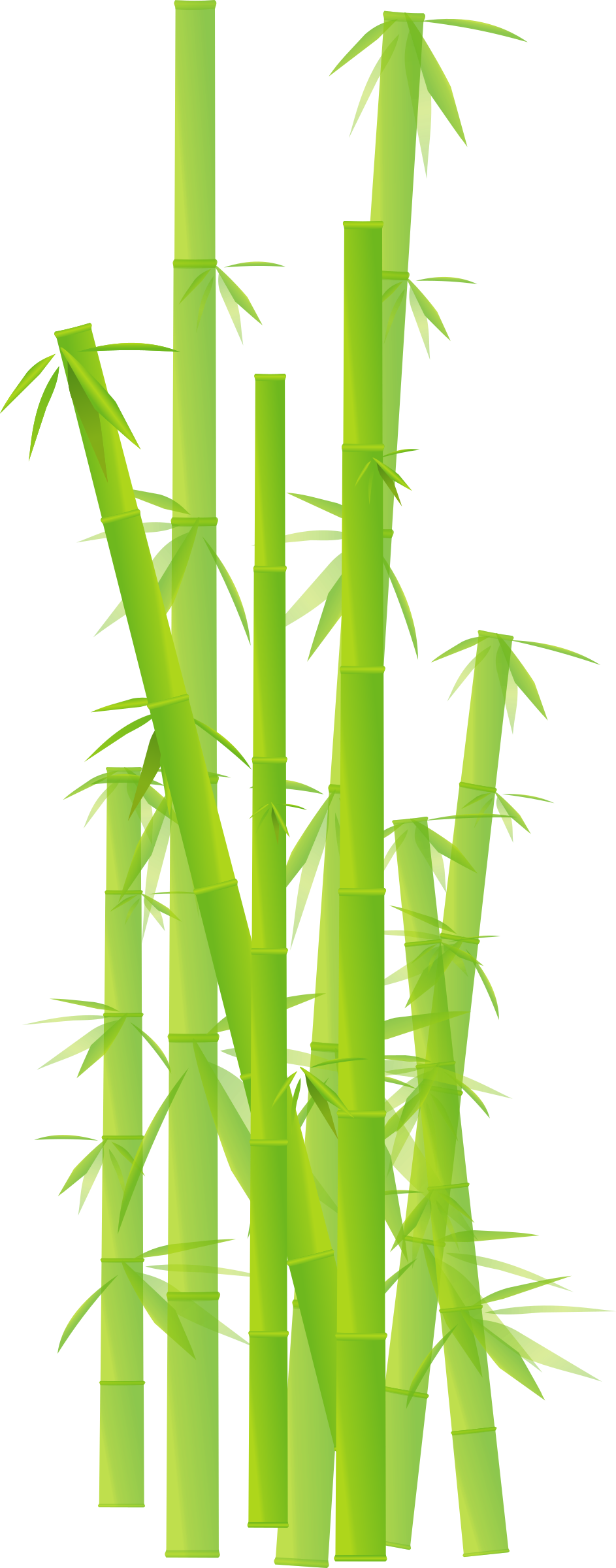 . Bamboo clipart transparent background