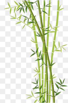Bamboo Clipart Transparent Background Bamboo Transparent