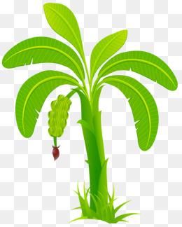 Banana clipart banaba. Tree png images vectors