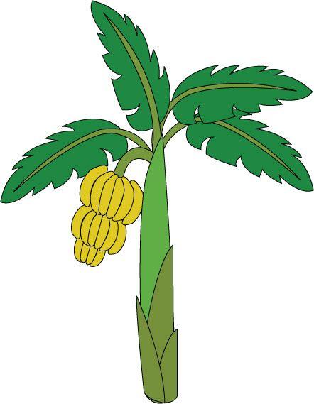 Treklens think photo best. Banana clipart tree