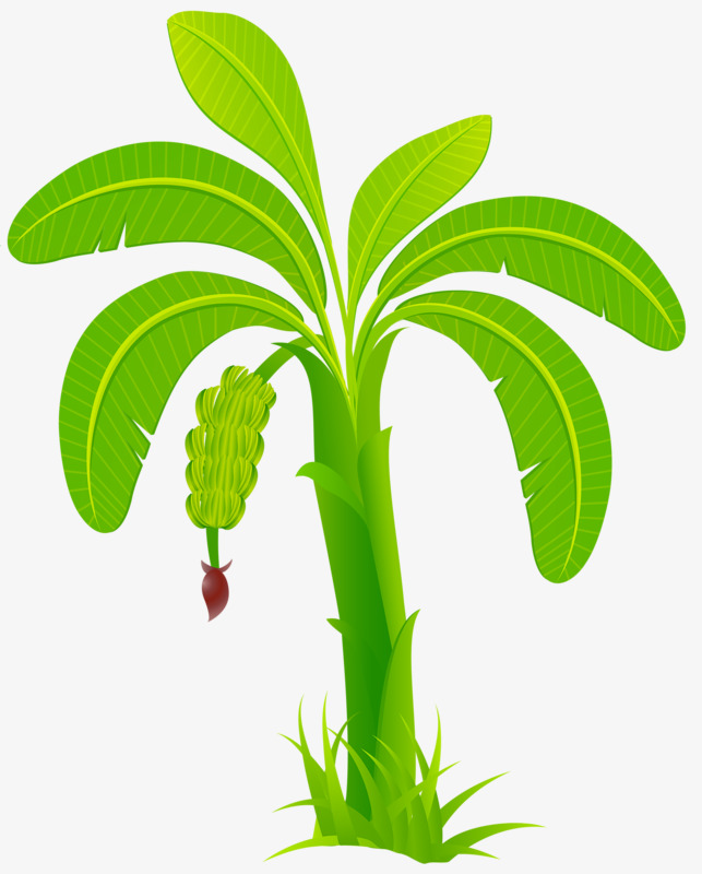 Banana clipart tree. Green trees results png