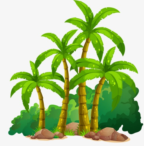 Coconut great summer png. Banana clipart tree