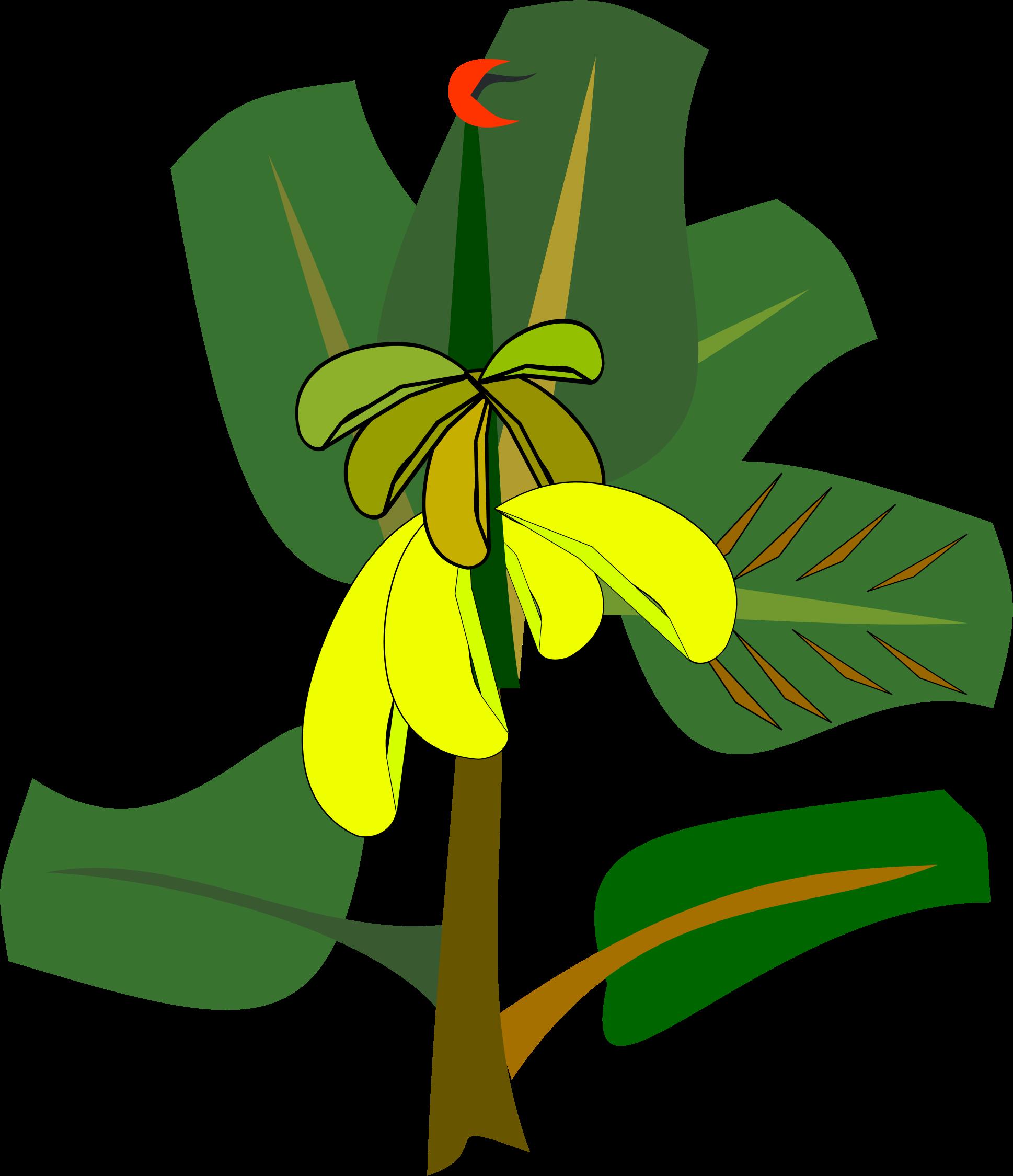 Bananas on the big. Clipart tree banana