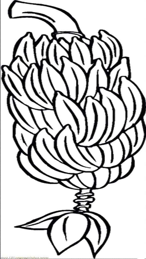 Cliparts bunch free download. Bananas clipart bunches