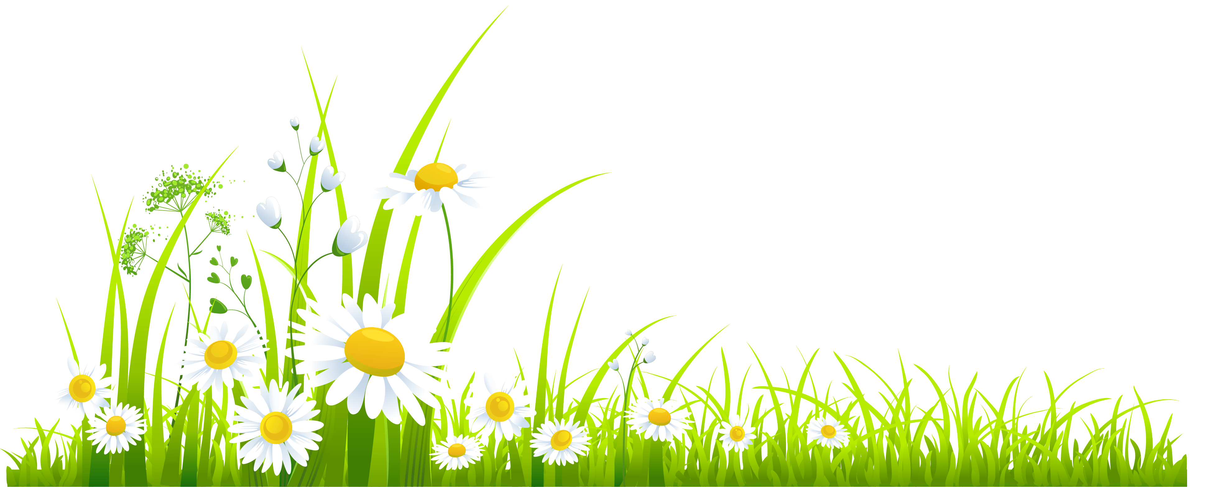 Clipart png spring. Grass with camomile gallery