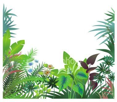 collection of jungle. Banner clipart tropical