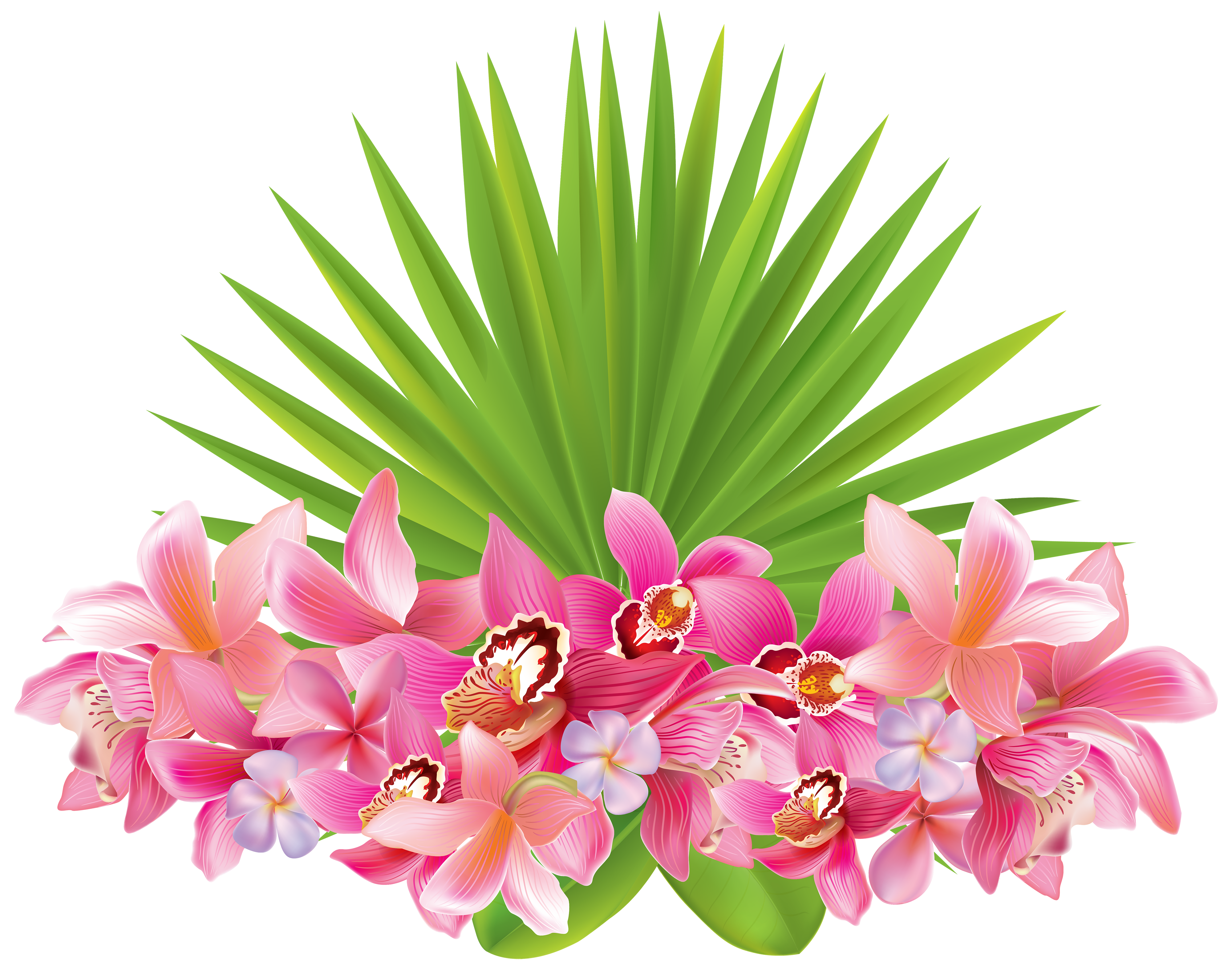 Tropical border png. Flowers clipart image gallery