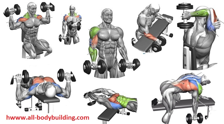 Lifting at home dumbell. Barbell clipart weight rack