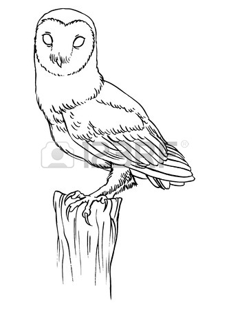 Owl at getdrawings com. Barn clipart line drawing