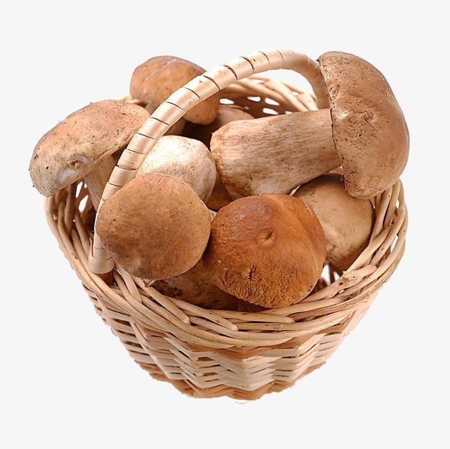 Of mushrooms fungus png. Basket clipart mushroom