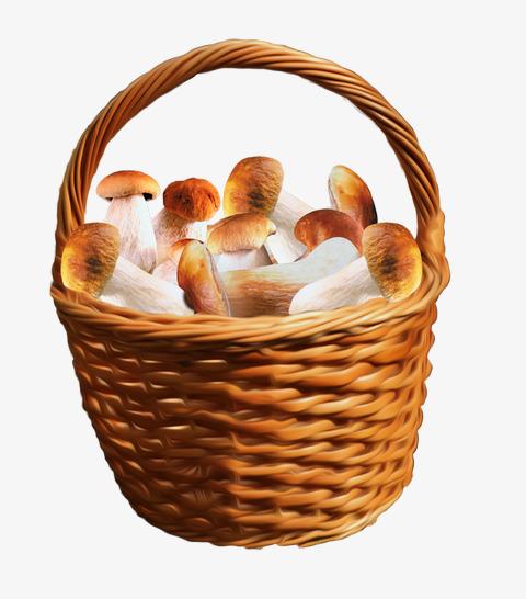 Basket clipart mushroom. A of mushrooms fungi