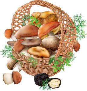 best mushrooms images. Basket clipart mushroom