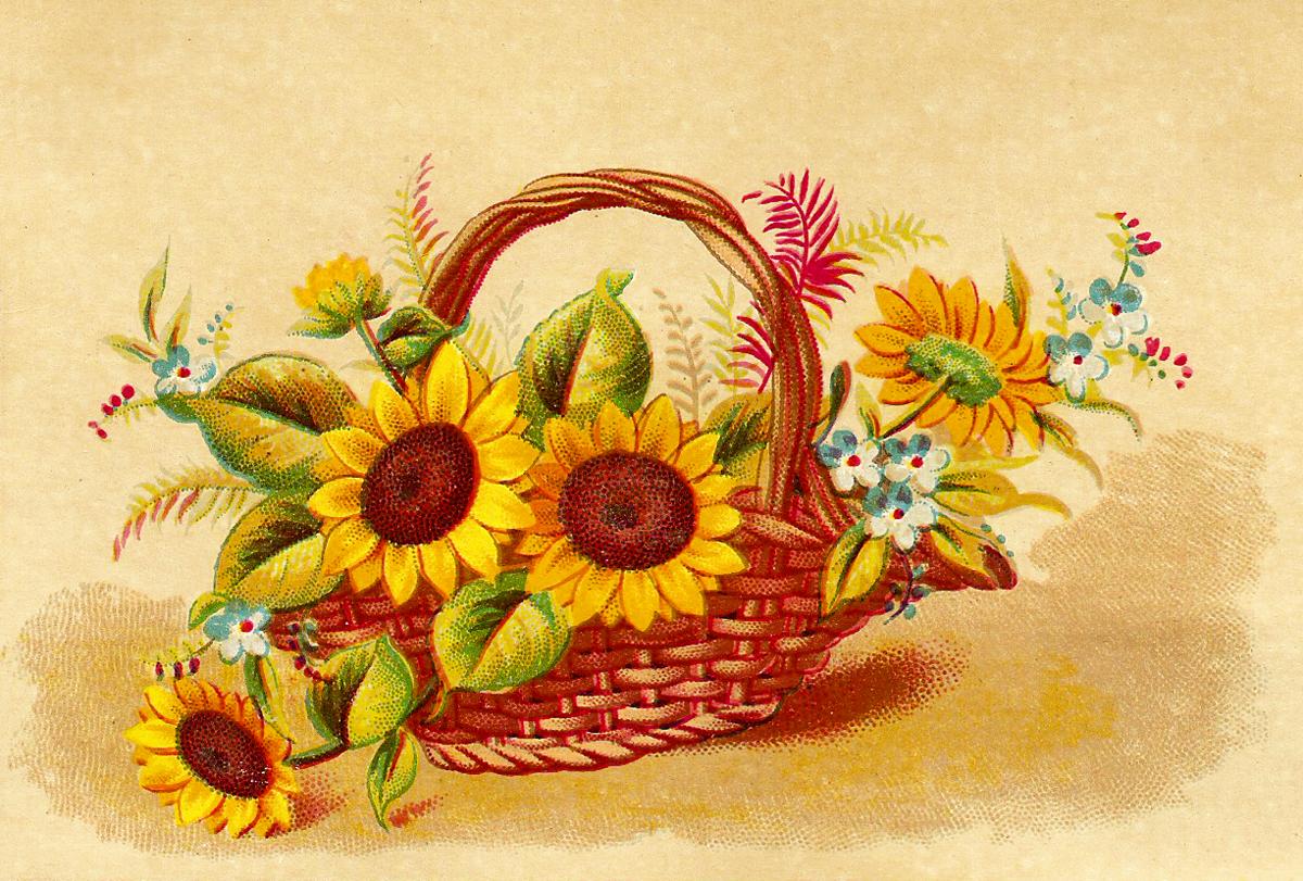 Catnipstudiocollage free vintage clip. Autumn clipart sunflower