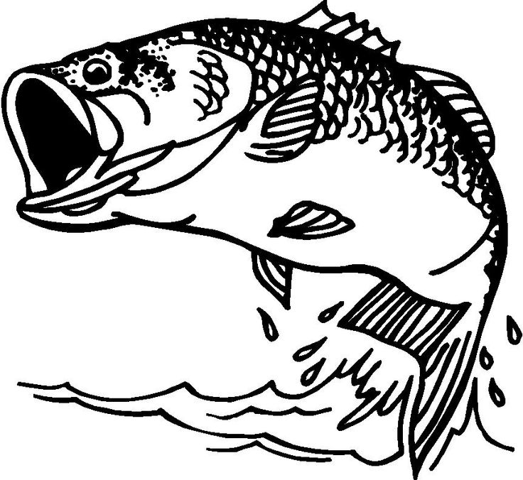Free fish cliparts download. Bass clipart