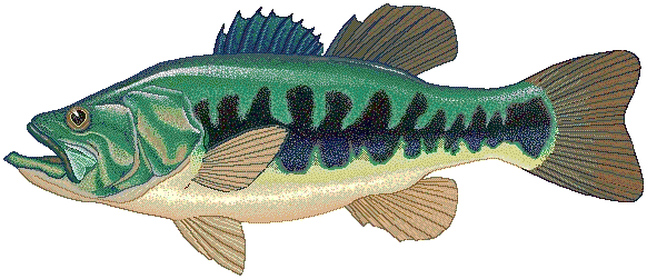 Largemouth animals aquatic fish. Bass clipart