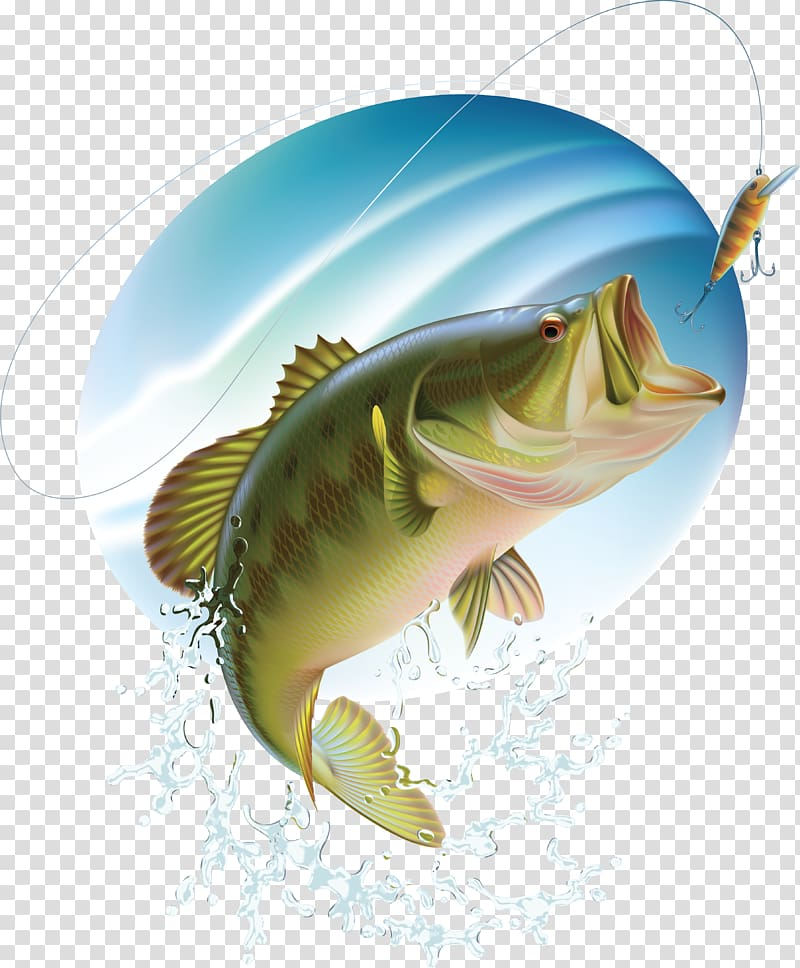 Silver and green illustration. Bass clipart bass fish
