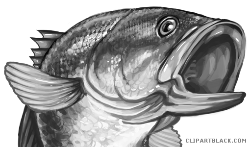 Clipartblack com animal free. Bass clipart bass fish