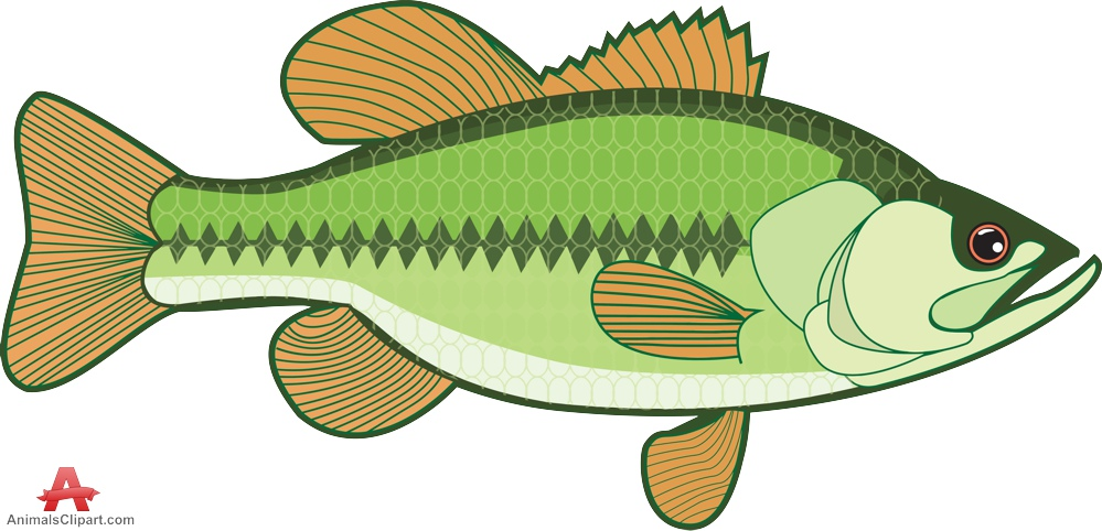 Bass clipart bass fish. Free cliparts download clip