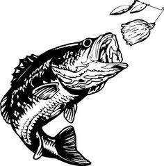 Bass clipart bass fish. Fishing