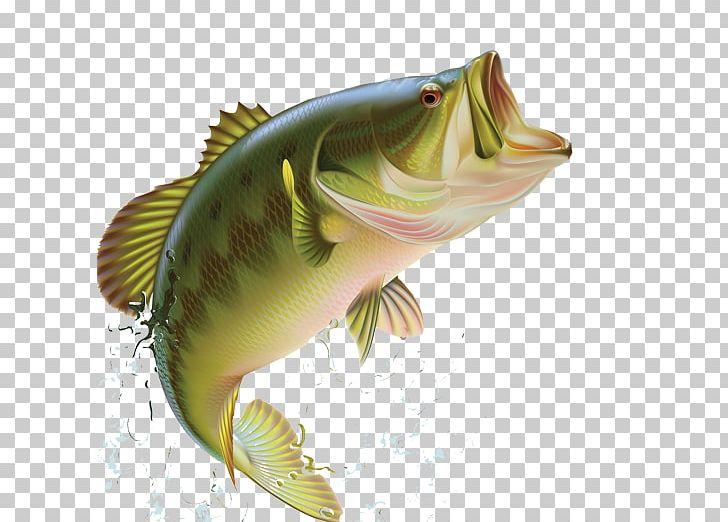 Largemouth fishing sunfishes png. Bass clipart bony fish