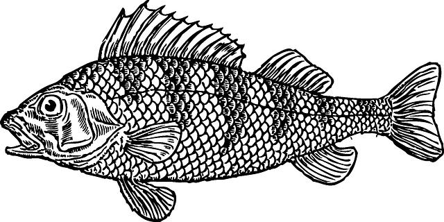 Bass clipart bony fish. Water cartoon illustration jumping