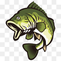 Largemouth clip art open. Bass clipart bony fish