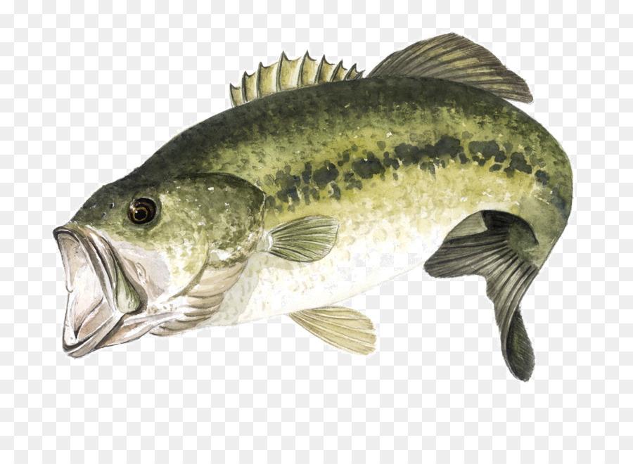 Fishing cartoon transparent clip. Bass clipart bony fish
