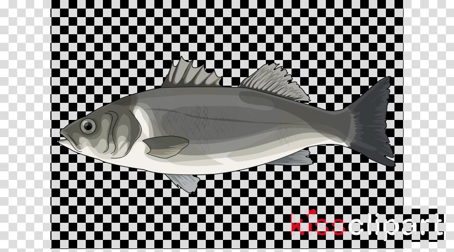 Bass clipart bony fish. Fin