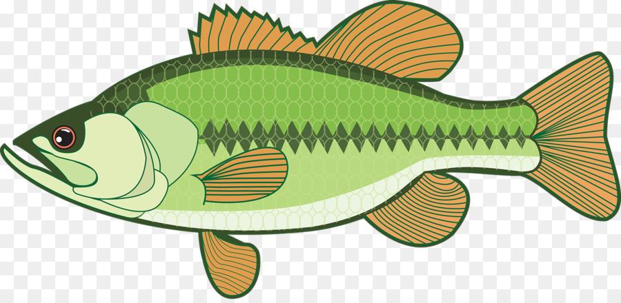 Clip art fishing png. Bass clipart bony fish