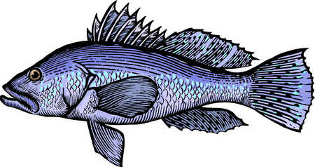 Bass clipart cartoon. Stock illustration a drawing