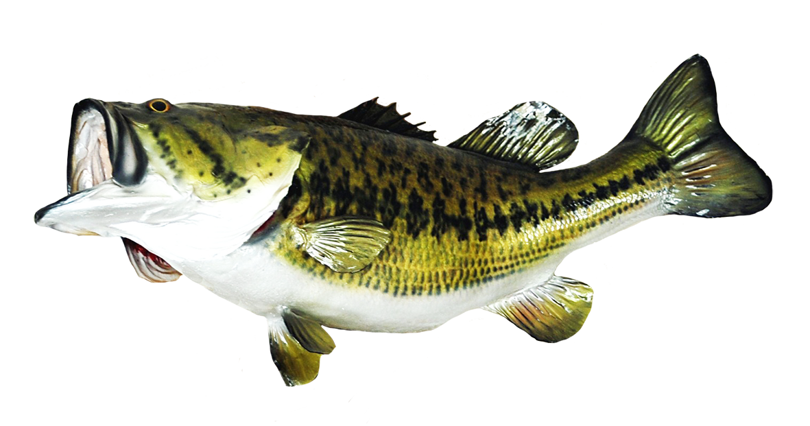 Fish clip art large. Trout clipart spotted bass
